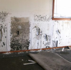 Mold Removal Minneapolis St Paul Mn Remodeling Water Damage Company