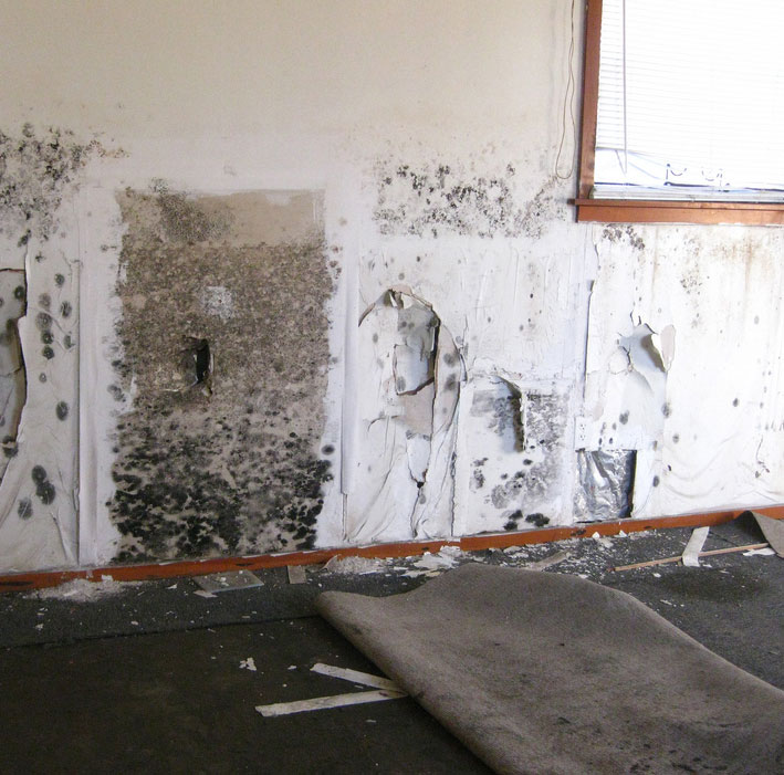 Mold Removal Minneapolis St Paul MN Remodeling Water Damage Company - Kitchen remodeling st paul mn