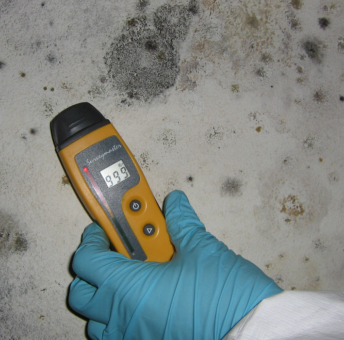 Mold Testing in Minnesota